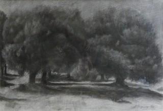 ΠΑΤΡΑΚΗΣ Δέντρα. Κάρβουνο  35χ50